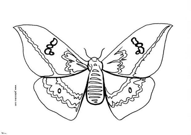 Coloriages papillon colorier - Coloriage en ligne papillon ...