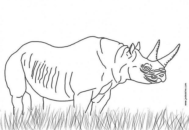 Coloriages coloriage d 39 un rhinoceros - Rhinoceros dessin ...