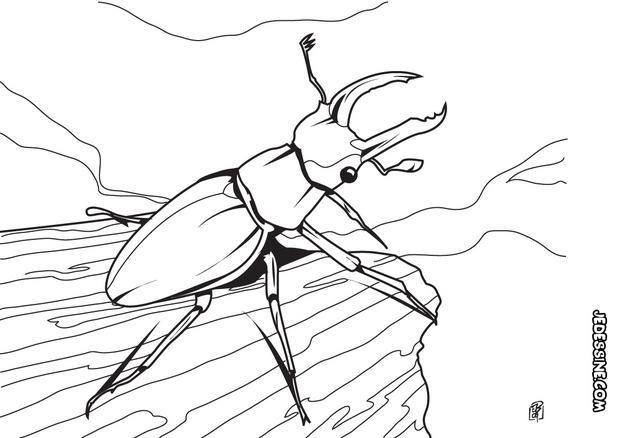 Coloriages scarab e - Photo de libellule a imprimer ...