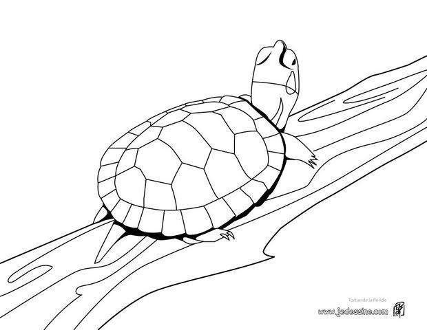Coloriages coloriage d 39 une tortue de floride - Dessin d une tortue ...