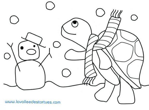 Coloriages coloriage d 39 une tortue en hiver - Tortue en dessin ...