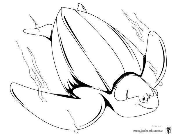 Coloriages coloriage d 39 une tortue luth - Tortue en dessin ...