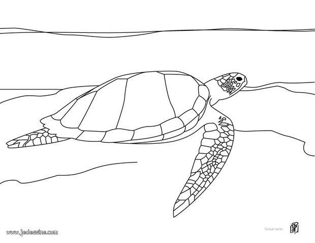 Coloriages coloriage d 39 une tortue verte - Dessin d une tortue ...