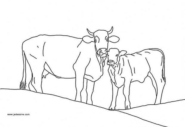 Coloriages coloriage d 39 une vache et son veau - Dessin d une vache ...