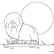Coloriage de chien : Chien à poils longs