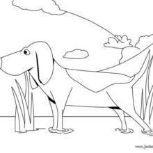 Coloriage de chien : Chien de chasse