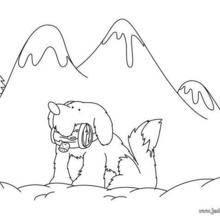 Coloriage de chien : Saint Bernard
