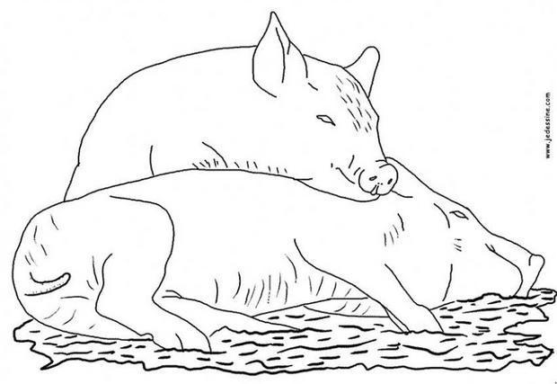Coloriages coloriage de deux cochons - Dessin d un cochon ...