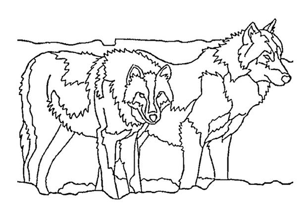 Coloriages coloriage de deux loups - Tete de loup dessin ...