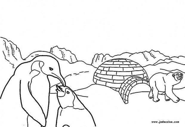 Coloriages animaux sur la banquise - Dessin banquise ...