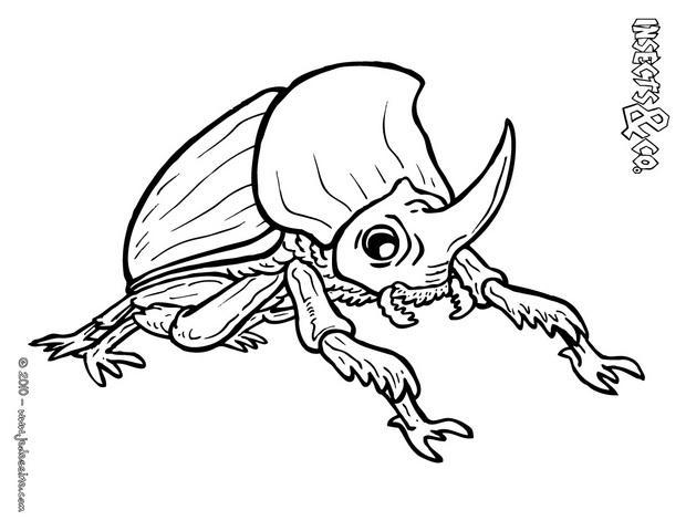 Coloriages coloriage scarabee rhinoceros - Rhinoceros dessin ...
