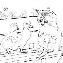Coloriage : Un chat et des canards