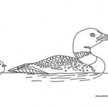 Coloriage d'un canard