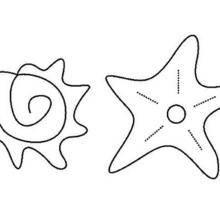Coloriage d'un coquillage et d'une étoile de mer