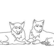 Coloriage d'un couple de loups