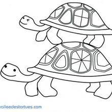 Coloriage d'un couple de tortues