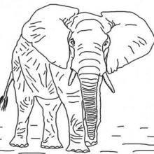 Coloriage d'un éléphant