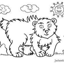 Coloriage d'un ours
