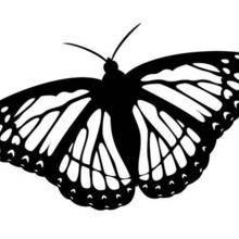 Coloriage d'un papillon N°11
