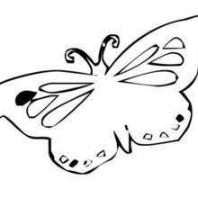 Coloriage d'un papillon N°12