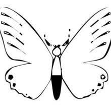 Coloriage d'un papillon N°13