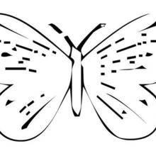 Coloriage d'un papillon N°14