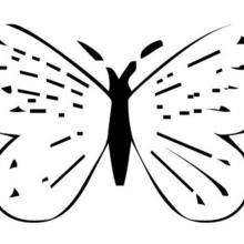 Coloriage d'un papillon N°21