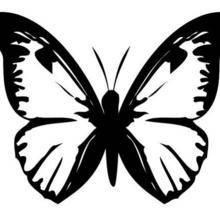 Coloriage d'un papillon N°4
