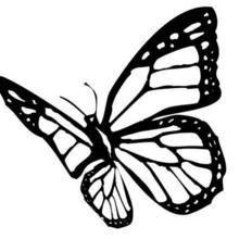 Coloriage d'un papillon N°5