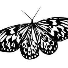 Coloriage d'un papillon N°7