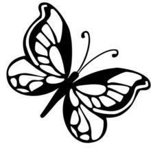 Coloriage d'un papillon N°8