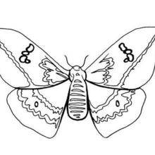 Coloriages papillon multicolore - Coloriage d un papillon ...