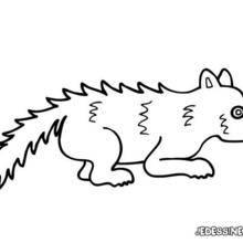 Coloriage d'un petit renard