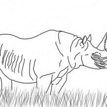 Coloriage d'un rhinoceros
