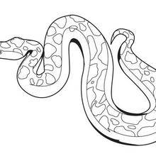 Coloriage d'un serpent totem