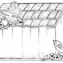 Coloriage d'une niche à oiseaux