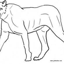 Coloriage d'une panthère