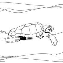 Coloriage d'une tortue caouanne