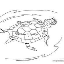 Coloriage d'une tortue de Floride qui nage