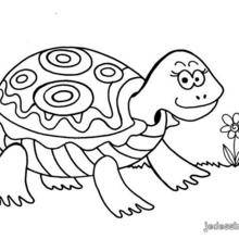 Coloriage d'une tortue