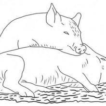 Coloriage de deux cochons