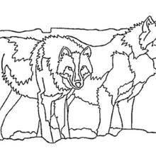 Coloriage de deux loups