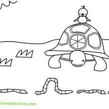 Coloriage de la tortue et les vers de terre