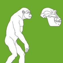 préhistoire, Coloriages Australopithèques