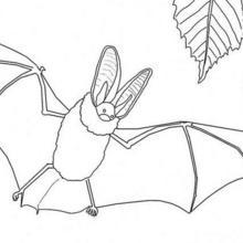 Coloriage d'Halloween : Coloriage d'une chauve-souris