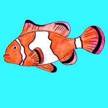 Leçon de dessin : Dessiner un poisson-clown