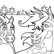 Coloriage : Couple de chevaux