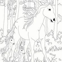 Coloriage : Bella Sara, jument et son poulain