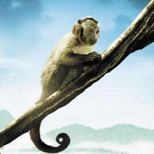 Découvre en vidéo l'avant-première du film Amazonia