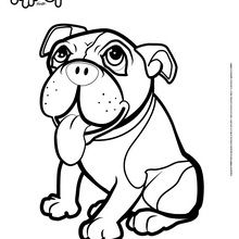 Coloriage : Le Bulldog de Nancy